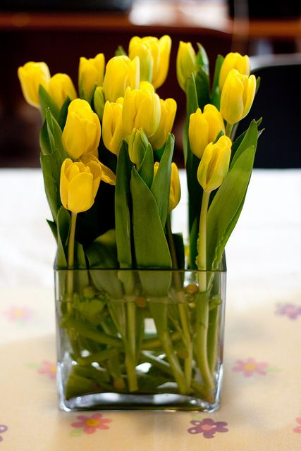 Beautiful yellow tulips - they look best when they are simple, preferably in a square glass vase.