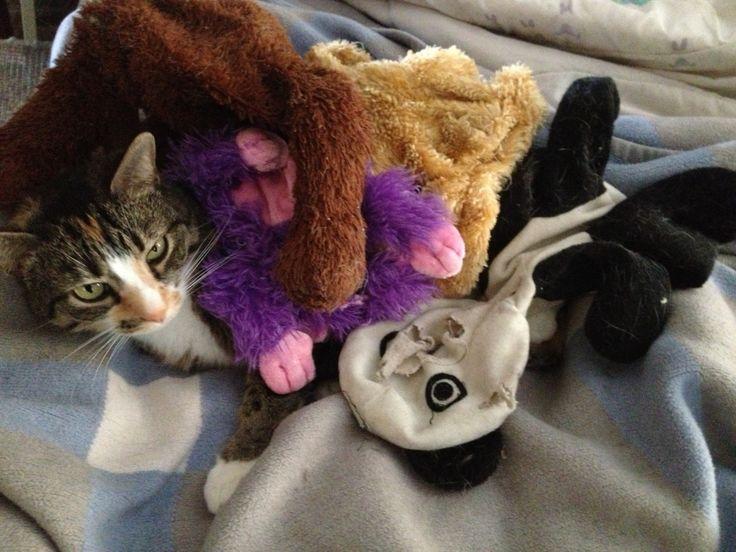 Bulbasaur pile