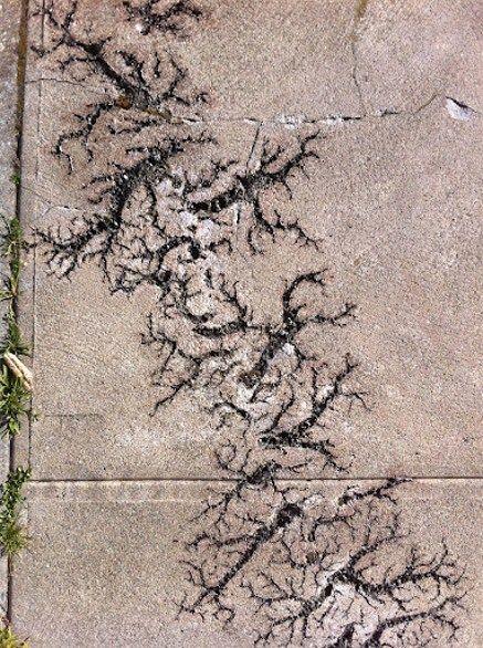 Lichtenberg figure tattooed into the sidewalk after a lightning strike #Lichtenberg #figure #pattern