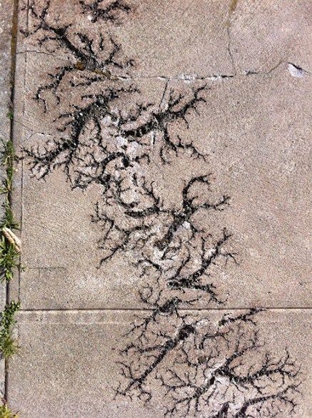 Lichtenberg figure tattooed into the sidewalk after a lightning strike