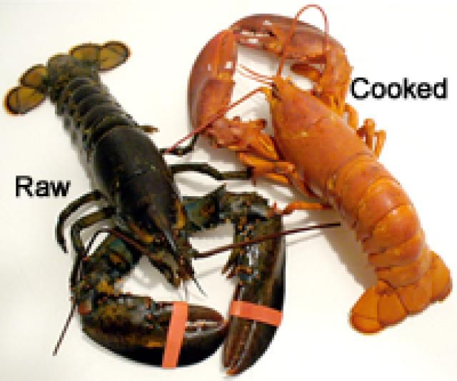 10 Tricks for Tender and Sweet Lobster: Live and Cooked Lobsters