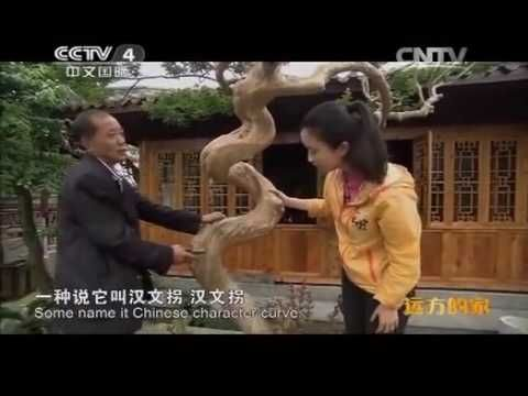 FIRST   VILLAGE    OF   MINJIANG    RIVER   BONSAI