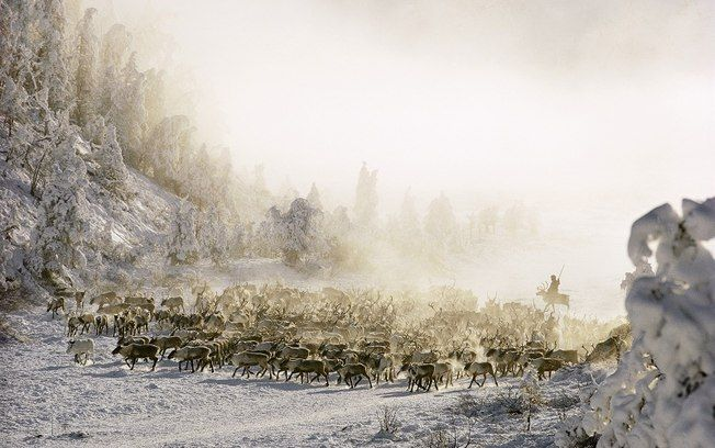 Foto do dia: Paisagem da SibériaPhotographers, Dean Conger, National Geographic, Dean O'Gorman, Siberian Snow, Siberian Reindeer, Crosses, Animal, Young Girls