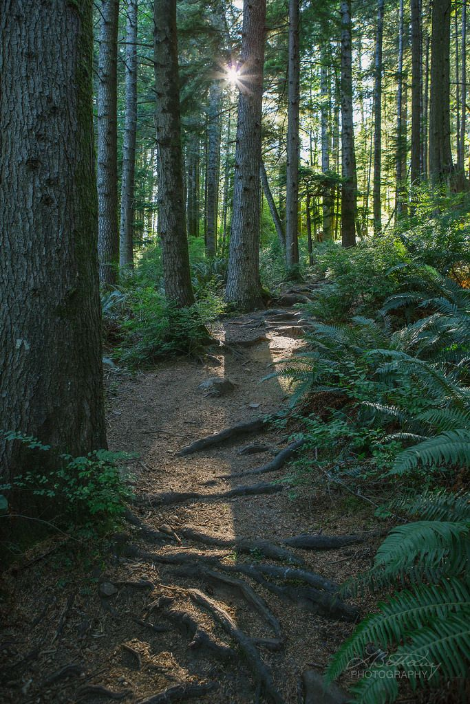 Ripple Rock Trail, Campbell River, BC by Lisa Bettany