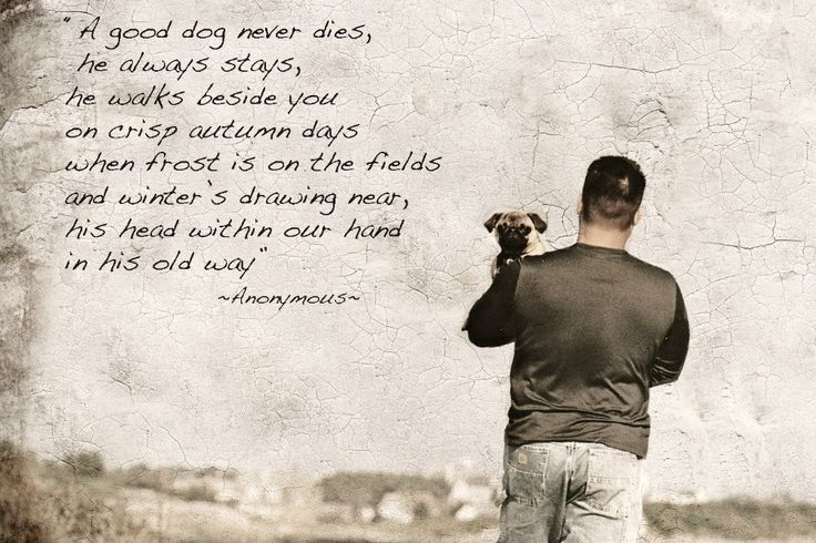 Sympathy dog loss quotes - photo#40