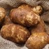 How To Plant Potatoes In a Potato Tower | Veggie Gardener