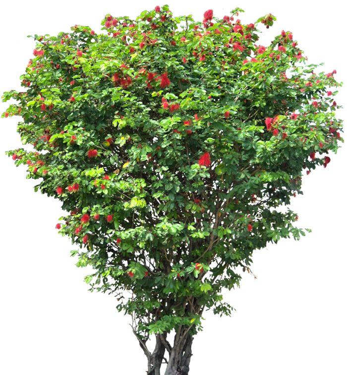 20 Tree Png Images Free Cutouts For Architecture Landscape Interior Renderings Desenho De Interiores Paisagismo Plantas