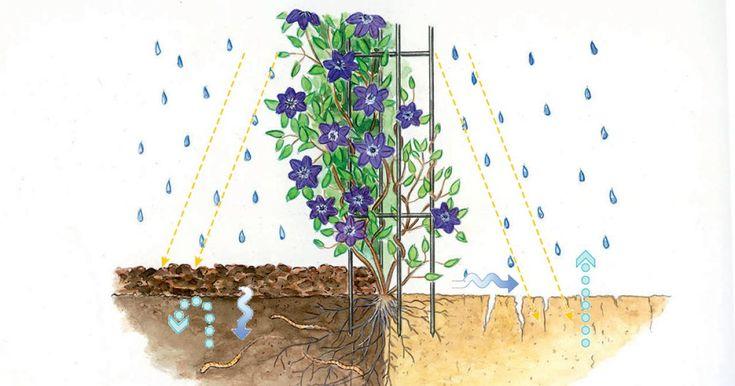 Viele Pflanzen blühen in einer Mulchschicht erst so richtig auf. Die Bodenabdeckung unterdrückt nicht nur Unkraut – Mulch hat viele weitere Vorteile.