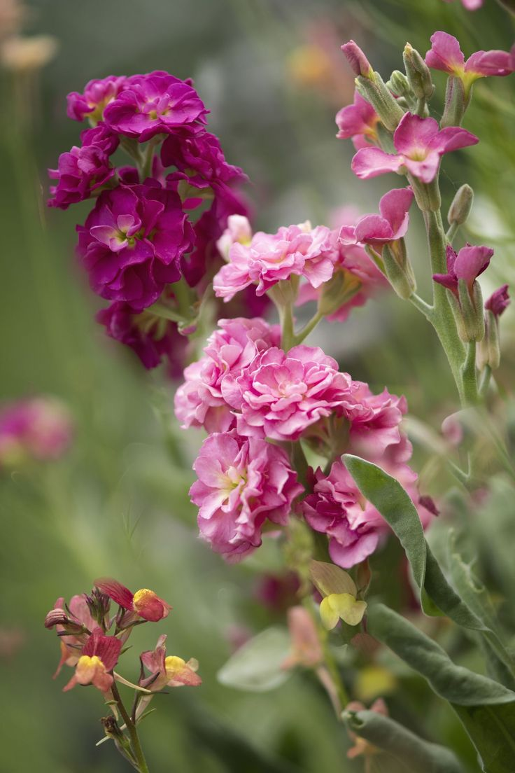 10 fragrant plants that will make your garden smell