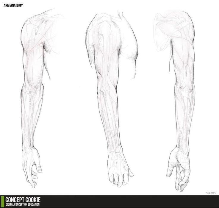 80 best Drawing Reference - Anatomy - The Arm images on Pinterest ...