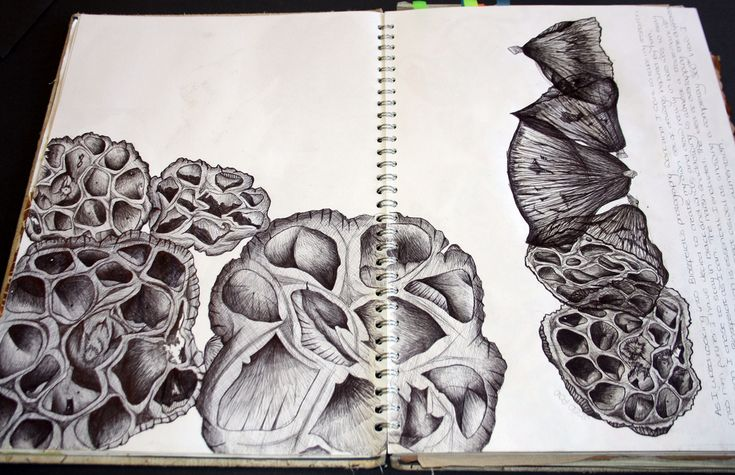 Double page spread of sketchbook work, all in biro pen. Direct observation of a seed pod, experimenting with layering from different angles on the right hand side.  Dimensions: Double page spread in A3 sketchbook