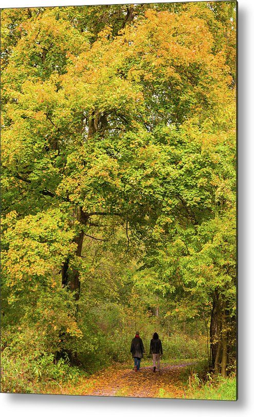 Trees yellow and green, Metal Print for sale. Begin of autumn, a couple is doing a walk in the colorful forest. Art for your Home Decor and Interior Design by Matthias Hauser.