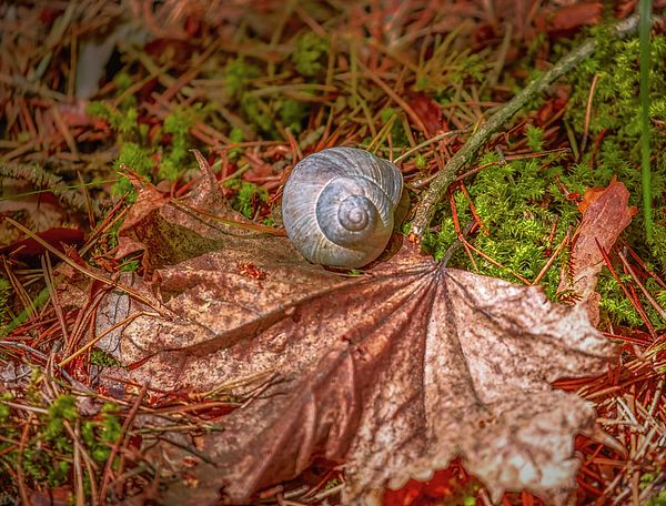 Snail in a forest south of city Enkoping