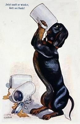 "GOooOOoooOOD MORNING! Loosely translated, ""Jetzt säuft er wieder gott sei dank."" means ""Now he drinks again God be thanks."" {Thanks Babelfish!} #dachshund #coffee #german"