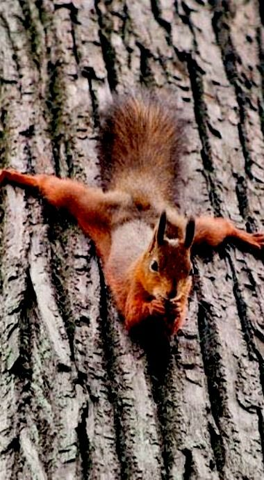 There's no Ninja like a squirrel Ninja!