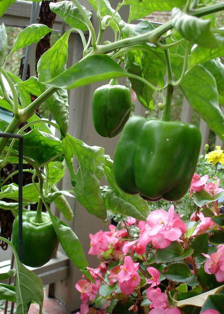 25+ Best Ideas About Garden Club On Pinterest | Gardening, Home