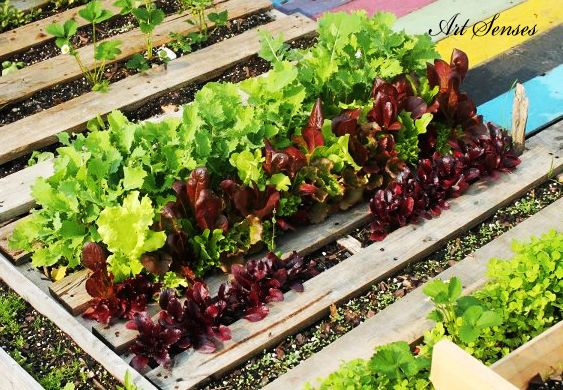 Зеленчукова градина в палети | Art senses – артистични идеи за интериор и градина