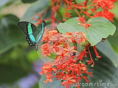 My image has been added to the 'Beautiful Butterflies' collection: http://www.dreamstime.com/beautiful-butterflies-colldet24667