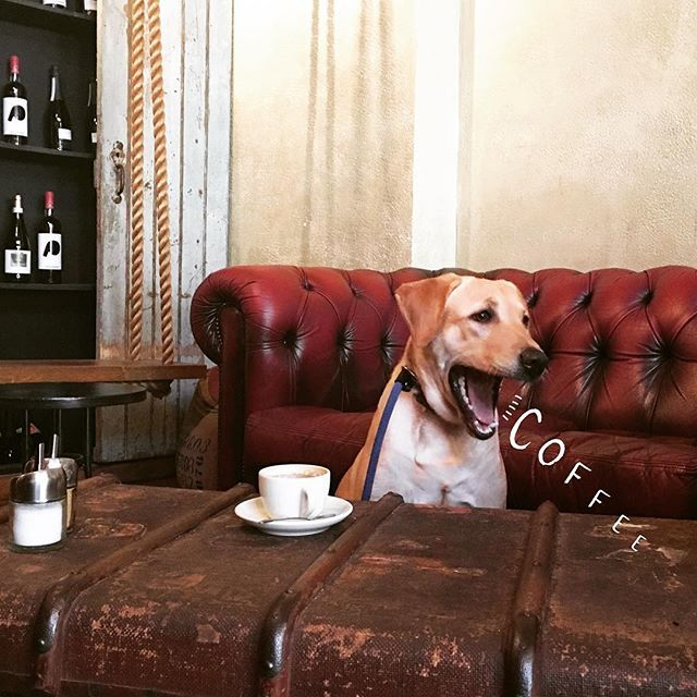 Dog and coffee