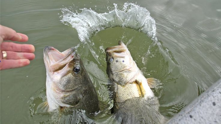 Fishing UK - MAGIC Moment! DOUBLE Big Bass Catch with Spinnerbait