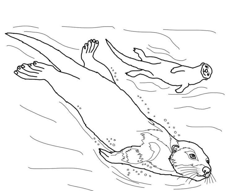 Sea Lions Dive With Quiet