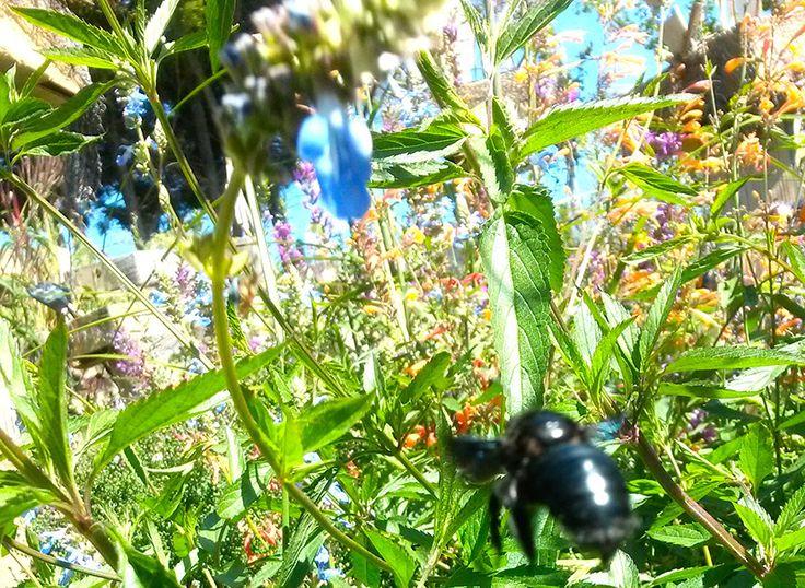 """production écologique auvergne de plantes d'ornements """"Les Jardins des Hurlevents """" http://www.plantes-vivaces-hurlevents.com/"""