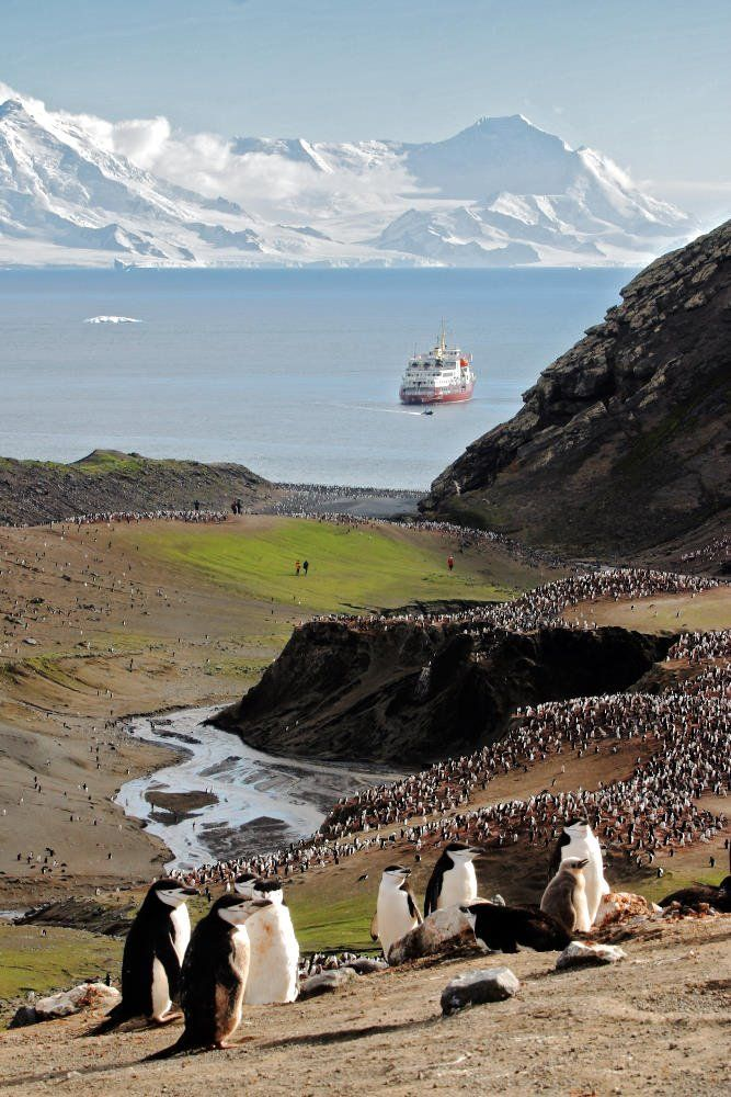 Chinstrap penguins at Baily Head on Deception Island, Antarctica   - Explore the World with Travel Nerd Nici, one Country at a Time. http://TravelNerdNici.com