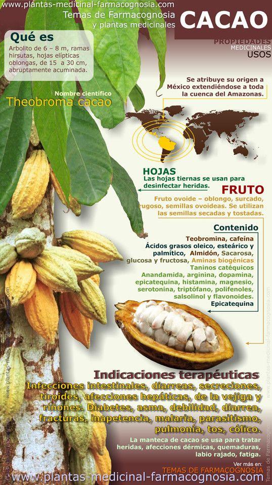 El #Cacao y sus propiedades, Vía: Plantas-medicinal-farmacognósia.com  Foto: Colección de Farmacia #DiSalud Grupo (Farmacia+DiSalud Te Cuida, s.l.), una #botica de barrio compatible con farmacia 2.0 (www.farmaciadisalud.com)
