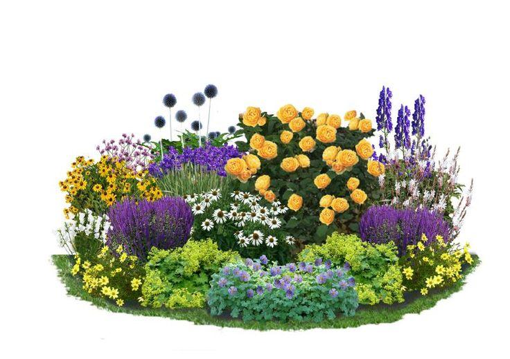 """Warm, leuchtend, positiv: Gelb bringt eine fröhliche Stimmung in jeden Garten. Den Mittelpunkt der Kollektion """"Sonnentraum"""" bildet eine der beliebtesten und schönsten Englischen Rosen, 'Graham Thomas'. Sie kombiniert die..."""