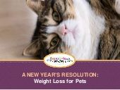 Give your pets everything they need to achieve their New Year's Resolution by checking out pet supplies online from Vet Supply Source!