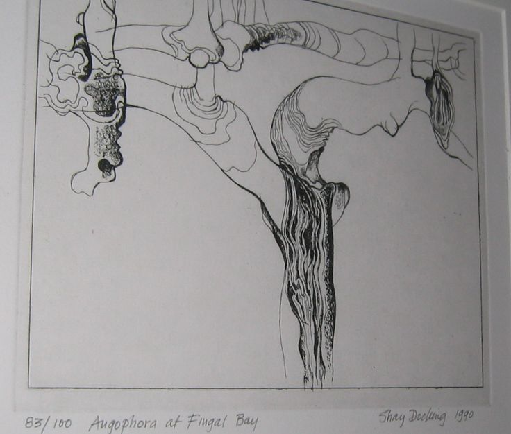 Angophora at Fingal Bay by Shay Docking 1990 in Lou Kepel book about Shay Docking Drawings