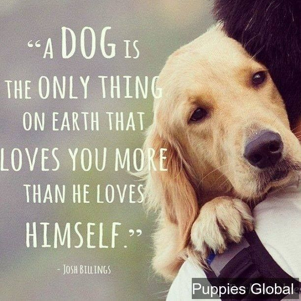 A Dog Love Funny Dog Video Funny Dog Images Funny Dog Memes Funny Dog Quotes Dog Quotes Dog Love I Love Dogs