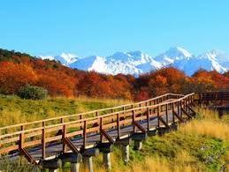 parque nacional tierra del fuego - Google-Suche