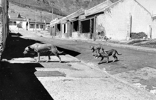 The people have gone.......only the strays left.