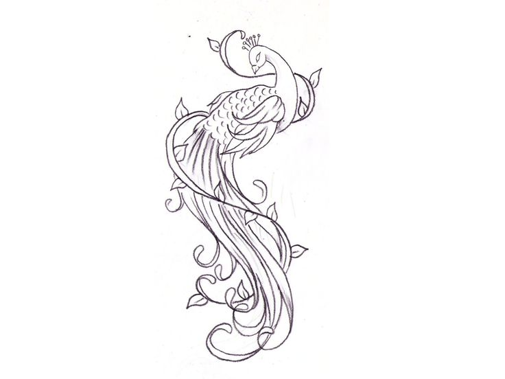 Line Drawing Of Peacock : Best ideas about small peacock tattoo on pinterest