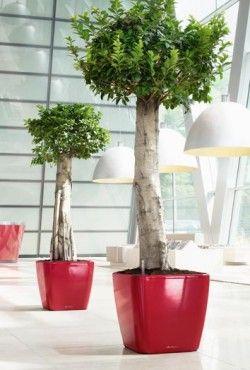 25 beste idee n over kunstplanten op pinterest nep planten - Kantoor decoratie ideeen ...
