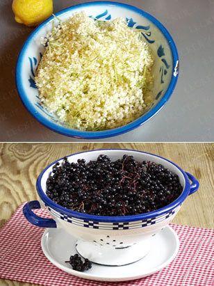 Holunder-Rezepte mit Blüten und Beeren - holunder-rezepte-2