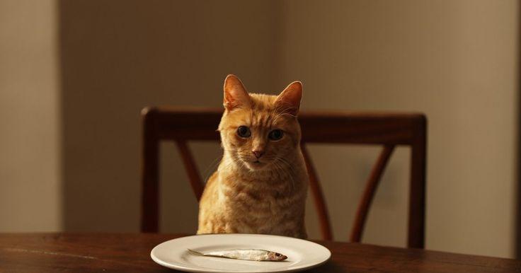 Como forçar um gato a comer. O veterinário entrega ao dono algumas seringas e explica que a comida e/ou água precisa ser forçada na alimentação do gato. Forçar a alimentação de um gato não é uma tarefa fácil. Isto requer tempo e paciência tanto para você quanto para seu gato. A ideia básica é manter o gato relaxado enquanto você lhe fornece a quantidade adequada de nutrição.