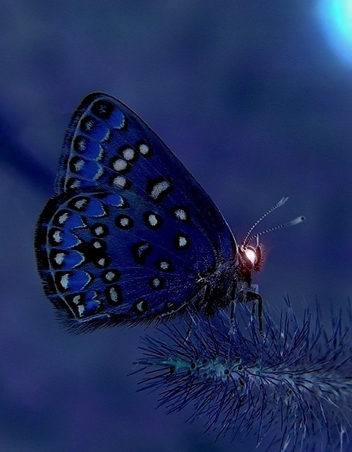 Day 1 - Something blue that symbolizes your personality