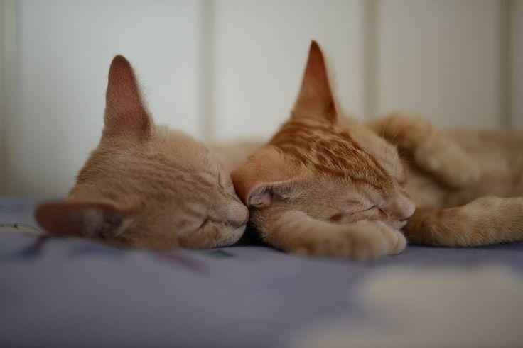 voglia di tenerezza  #lovecats #cat #cats #catsagram #catstagram #instagood #kitten #kitty #kittens #pet #pets #animal #animals #petstagram #petsagram #photooftheday #catsofinstagram #ilovemycat #instagramcats #nature #catoftheday #lovecats #furry #sleeping #lovekittens #adorable #catlover #instacat