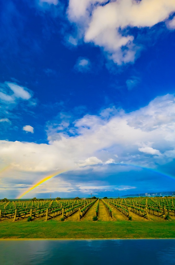 A rainbow reflected in an infinity pool with vineyards behind at the Elephant Hill Estate and Winery on the Te Awanga coast, near Napier, Hawke's Bay, North Island, New Zealand.