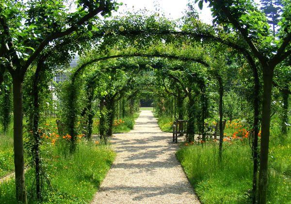 Jardin à la française et ses allées surmontées de pergolas