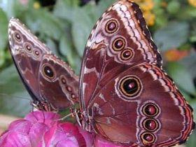 Bitkiler ve hayvanlar alemindeki tüm güzellikleri Allah yaratmıştır Video