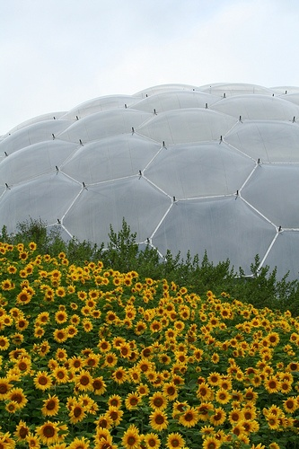 The Eden Project in Cornwall!  https://www.kidandcoe.com/city-scout/cornwall/tintagel