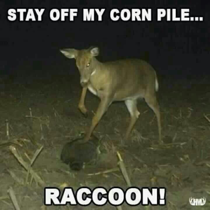 Funny Pics Captions About Hunting