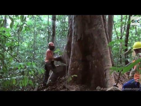 Deforestación en el Amazonas / Deforestation in the Amazon Basin [IGEO.TV]