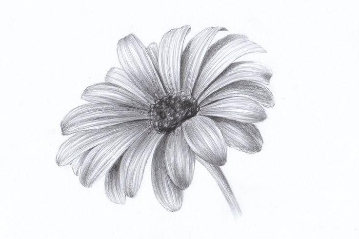 Daisy by Lelixiana