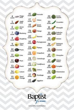 baby size growth chart by week: Best 25 fetus size by week ideas on pinterest week by week