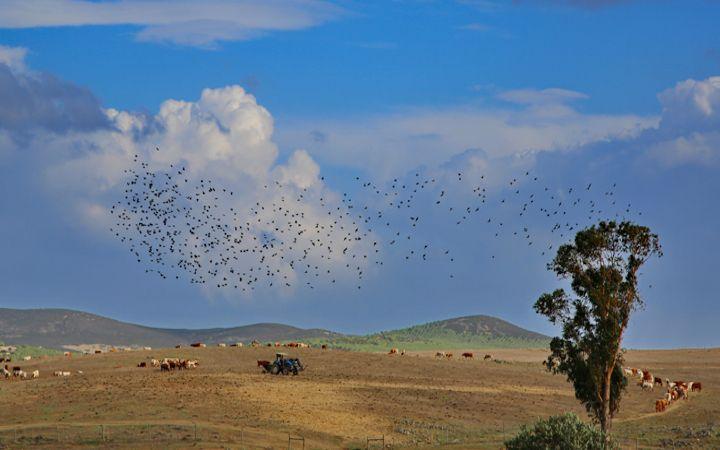 Stormo di uccelli nei pressi di Castro Verde
