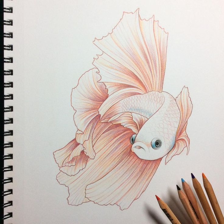 Image Result For Simple Ideas Background Of A Drawing In Color Pencil Colorful Drawings Animal